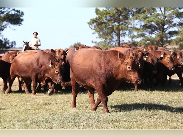 Temporada de outono deve apresentar valorização de 30% nos preços do gado